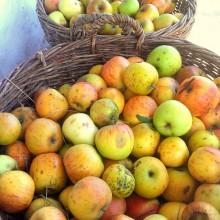Foto von Äpfeln in Körben