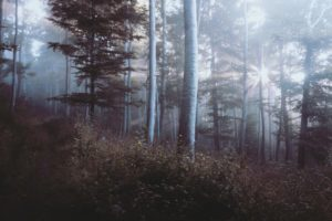 Foto eines lichten Waldes, durch dessen Bäume die Sonne scheint