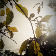 Gelbe Herbstblätter auf Zweigen aus der Froschperspektive.