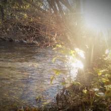 Eine Weide am Fluss in der Abendsonne.