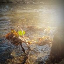 Ein Zweig im Flusswasser.