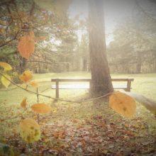 Parkbank in der Herbstsonne