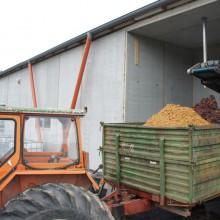 Ein orangefarbener Traktor fängt in einem Anhänger den Traubenpresskuchen auf.