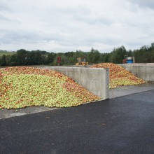 Foto von einer Betonbucht mit hunderten Kilo Äpfeln.