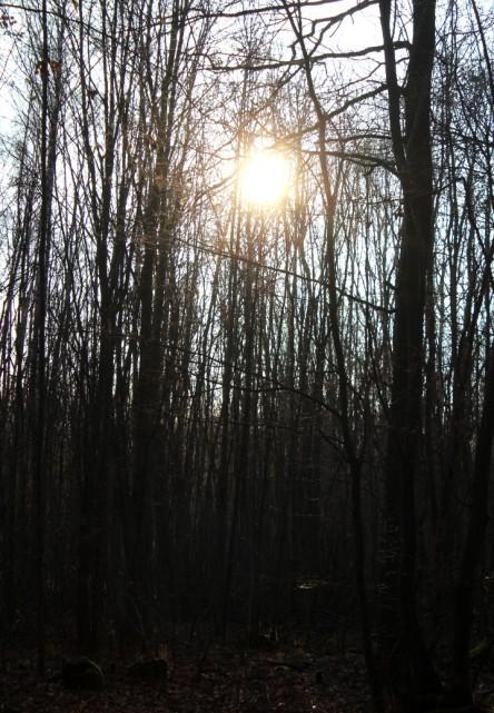 Wintersonne scheint durch die kahlen Bäume.