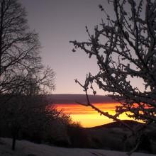 Foto eines winterlichen Waldes mit Morgenrot in der Ferne