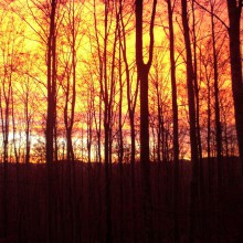 Foto eines rot gefärbten Morgenhimmels hinter Waldbäumen