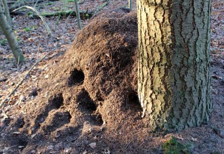 Ein sonnenbeschienener Baum mit angehäuftem Laub etc. links daneben und Löchern von Tieren.