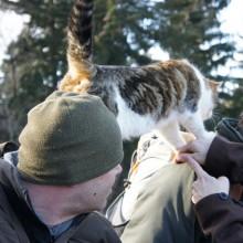 Foto von Katze auf einer Schulter