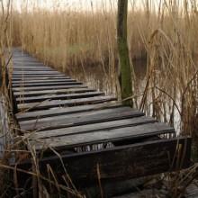 Wackeliger Steg mitten im Schilf am Neusiedlersee