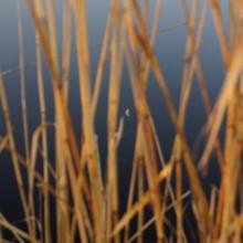 Der Mond spiegelt sich im dunkelblauen Wasser des Neusiedlersees