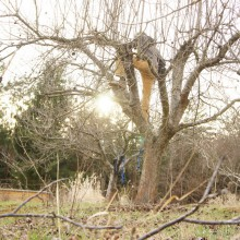 Foto eines jungen Mannes beim Baumschnitt