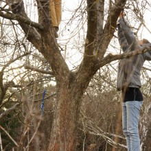Foto einer Gruppe junger Menschen beim Baumschnitt