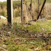 Gemeinsam im Weingarten 1