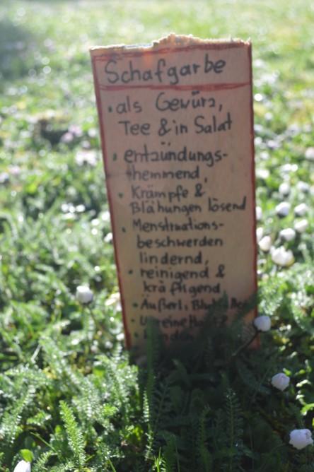 Wildkräuter im Vorgarten, hier: Schafgarbe mit Beschilderung