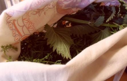 gesammelte Brennnesseln in einer Stofftasche, Brennnesseln sind sehr heilsame Wildkräuter!