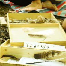 Vogelfedern in einer Kiste liegend