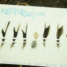 Eine Karteikarte mit sortierten und beschrifteten Vogelfedern.