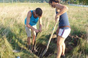 Zwei Personen mit Schaufeln auf einer Wiese beim Löcher graben
