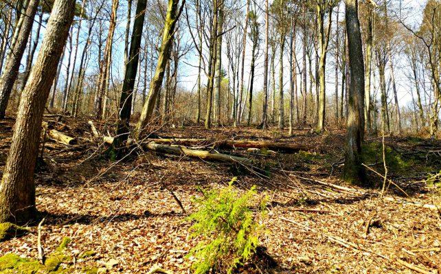 Foto eines lichten Waldes, durch den die Sonne blitzt