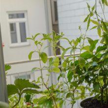 Foto aus dem Buch Bio-Gärtnern am Fensterbrett - Verschiedene Pflanzen am Fenster