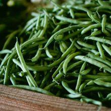 Foto von geernteten jungen grünen Gartenbohnen