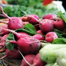 Foto von Karotten, Radieschen und Fenchelknollen auf einem Verkaufstisch
