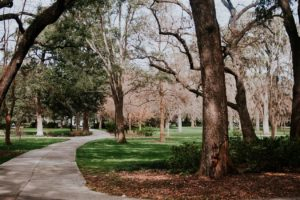 Bild eines Platten-Weges durch einen Park mit großen Bäumen