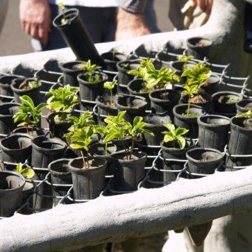 Selbsthilfe und Mithilfe für die Landwirtschaft