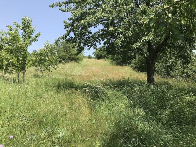Foto des zweiten Grundstücks nahe Gols im Burgenland