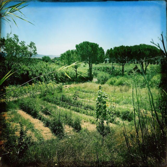 Foto des GoBugsGo Biogartens in Tarquinia / Italien