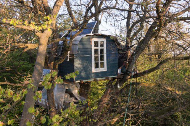 Bild eines Baumhauses im Dannenröder Wald