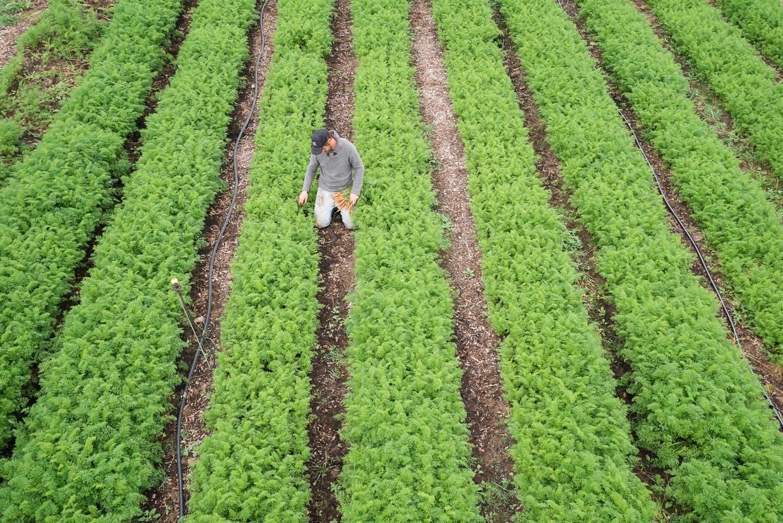 Reihen von eng gepflanzten Nutzpflanzen