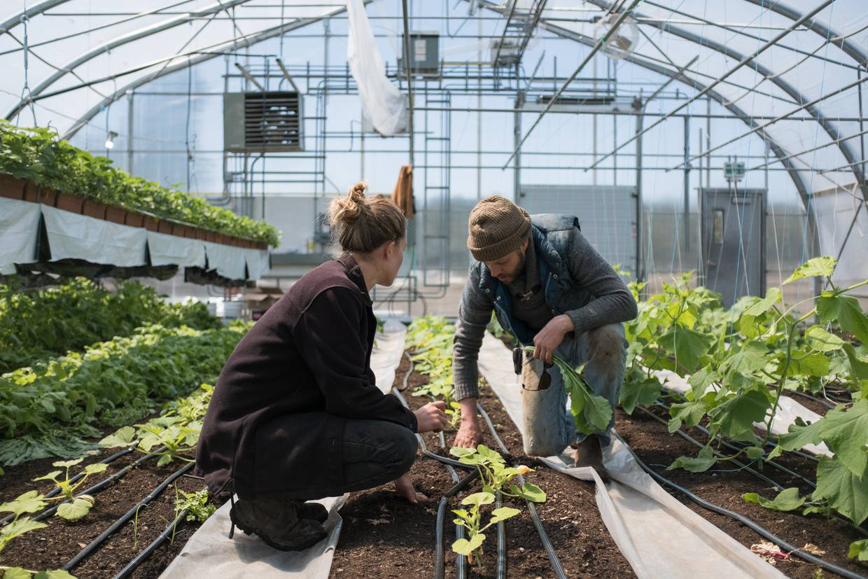 Jungpflanzen in einem Glashaus für den Market Garden