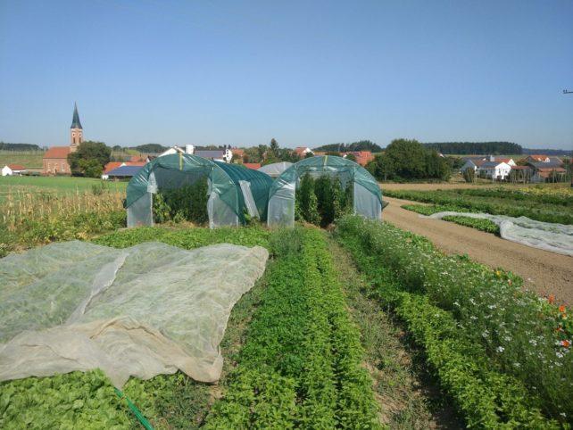 Landwirtschaft neu gedacht 4